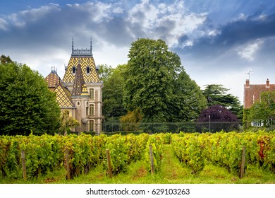 Burgundy, France - August 25, 2014: Landscape view of a typical vineyard in Burgundy, France, with Chateau from ornate roofs covered with geometric shapes with glittering colors