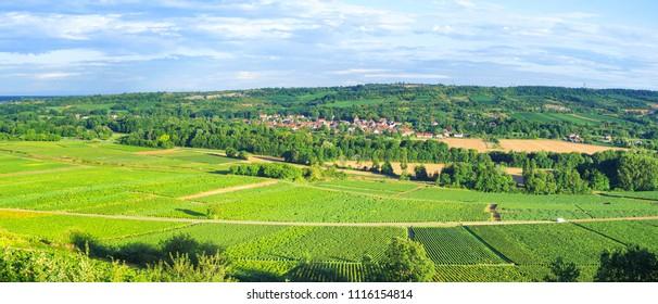 Burgundy - France. Panoramic View of Vineyards near Santenay