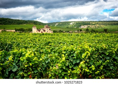 Burgundy, many chateau (castle) are surrounded by many acres of vineyards and are great wine producers. France.