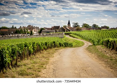 Burgundy. Road in the vineyards leading to the village of Vosne-Romanée. France