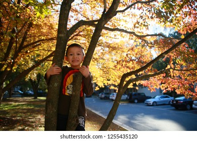 BURKE, VIRGINIA / USA - OCTOBER 30 2018:  A young boy of Asian descent clings to the trunk of a tree with its leaves changing color backlit by the late afternoon sun in front of townhomes and cars.