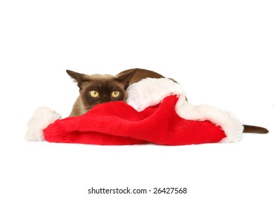 Burmese cat hiding behind Christmas hat
