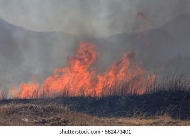 Burn off the grass field in Mt.Fuji in Japan