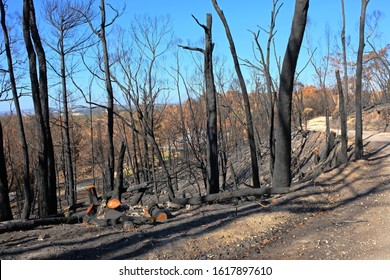 Burned black trees and land. Trees and bushland burnt during ferocious bushfire in the Adelaide Hills, South Australia in December 2019.