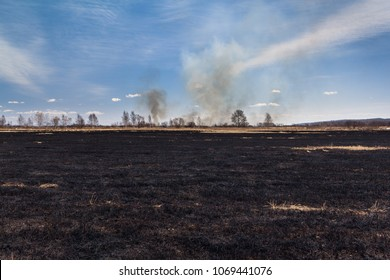 Burned field and smoke in the forest after wildfire under a blue sky at the background.
