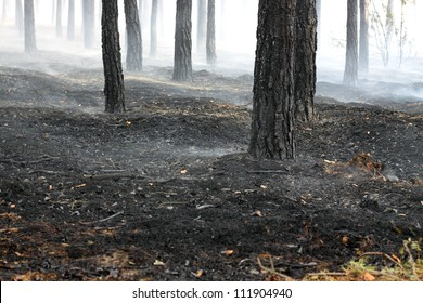 Burned forest after fire