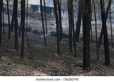 burned forest the day after a devastating fire