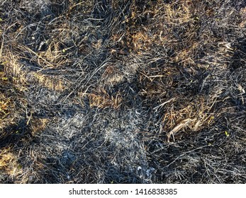 Burned grass. Spring fires. Ashes of the burnt grass. A field with burnt grass with trash and burnt trees. Intentional arson. The destruction of insects. Burnt grass in the city. Scorched earth.