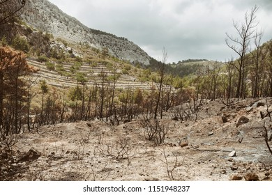 Burned land and trees, wildfire aftermath, greece