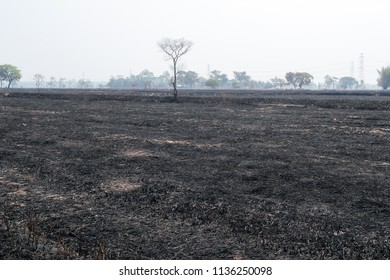 Burned Rice Straw Field, Desolate Landscape