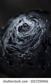 Burned rose, ash