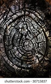 burned tree log