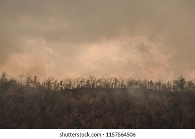 Burned trees following a wildfire.