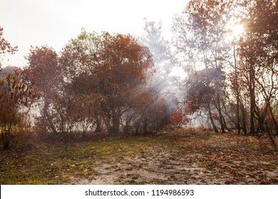 Burned trees with smoke
