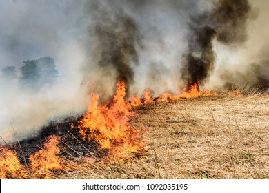 Burning agricultural field, smoke pollution. Image of global and their natural disaster risk.