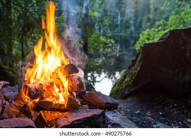 Burning campfire in forest