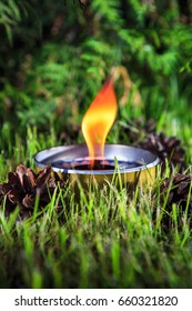 burning candle in the grass on the background of the branches of the arborvitae