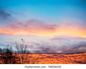 Burning clouds of orange color at sunrise behimd a crow bird in tree top at winter