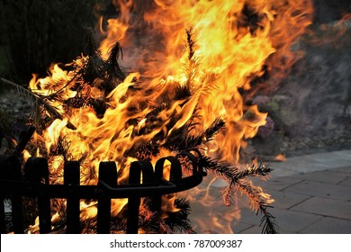 Burning Fir Tree in The Garden. German Easter Traditions. The Tree For Firewood.