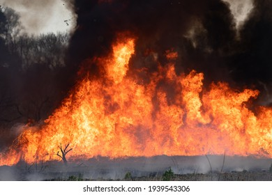 Burning flames, open burning of reed colony
