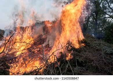 Burning forest. Bunch of trees burning in the forest