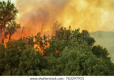 Burning Forest. California Wildfire Closeup Photo.