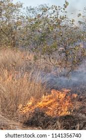 burning grass in arid african savanna starting a bush fire, Kruger National Park, South Africa