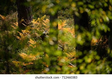 burning red birch tree leaves on dark background with foliage in dry sunny autumn. forests of Latvia