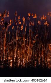 Burning reeds night