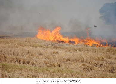 Image result for moving picture of burning fire stubble