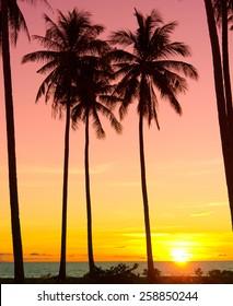 Burning Skies Coconut Horizon
