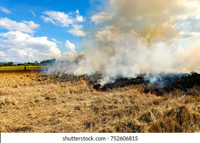Burning straw stubble farmers when the harvest is complete. Rice Field after harvest, Thailand.