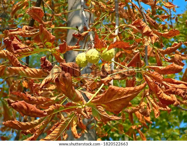 burning-sun-leaves-fruit-tree-600w-18205