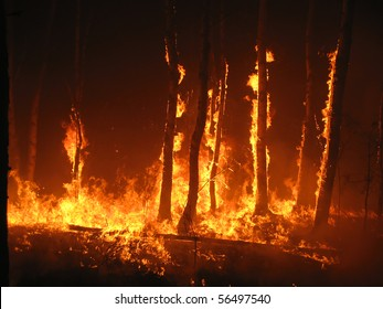 Burning trees in the forest