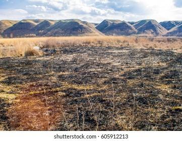 Burnt cane