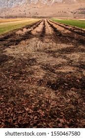 Burnt farming land in mountain area