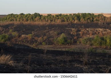 Burnt forest and land disastrous consequences of fire
