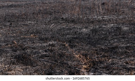 Burnt grass in the field. Arson of grass. Burned earth after a fire.