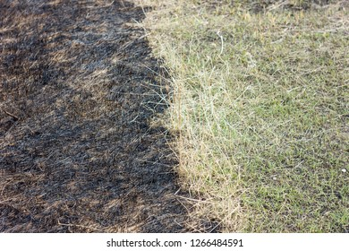 burnt grass in spring ,Closeup arson and burned dry grass background
