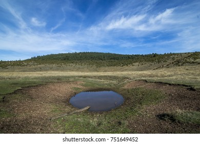 Burnt land around a small pond in the meadow and forests in the background during nice day