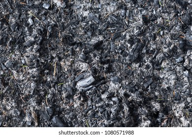 Burnt out charcoal after burning twiggs and branches during spring.