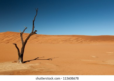 Burnt tree. Sand dunes in the desert. Blue sky. No other objects. Namibia. Africa.