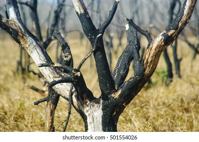 Burnt trees in Barker Reservoir. Houston, Texas