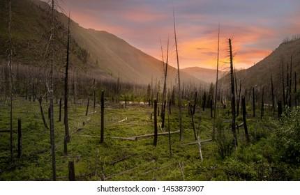 Burnt trees in Glacier park at sunset