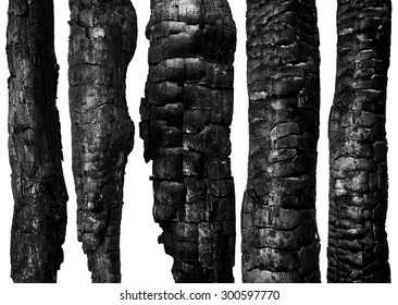 Burnt wood isolated on white background. Set