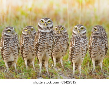 burrowing-owls-annual-meeting-local-260n