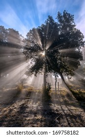 Burst of sunlight coming through leaves and branches of backlit tree in misty autumn morning.