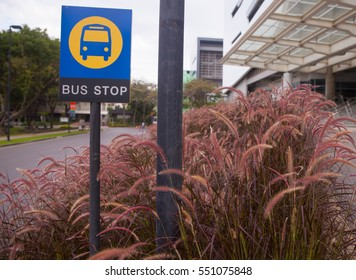 bus stop sign near clump of pink grass