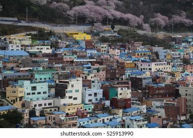 BUSAN - 4 APR: Gamcheon Culture Village in Busan, Korea on 4 April 2016