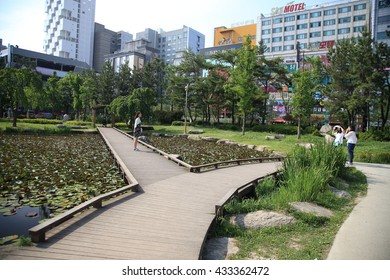 BUSAN, SOUTH KOREA - May 27, 2016:lotus flower, Rose Garden in Busan, South Korea